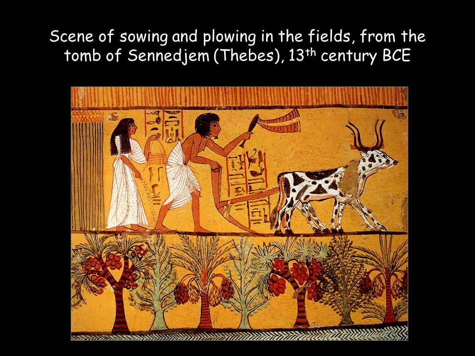 Scene of sowing and plowing in the fields, from the tomb of Sennedjem (Thebes), 13th century BCE