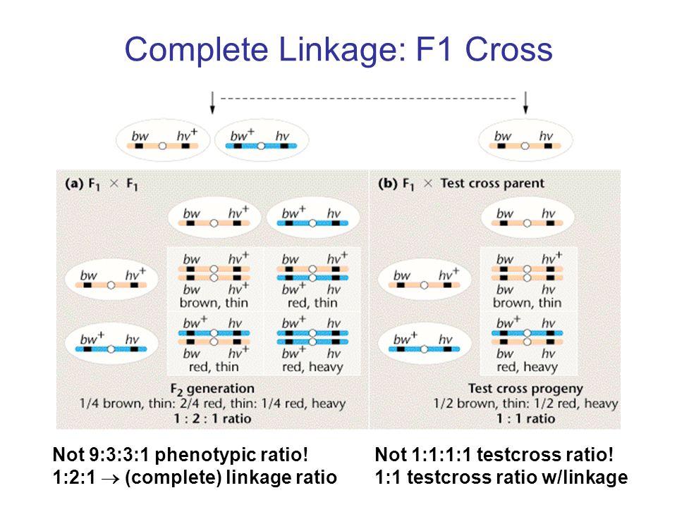 linkage ratio