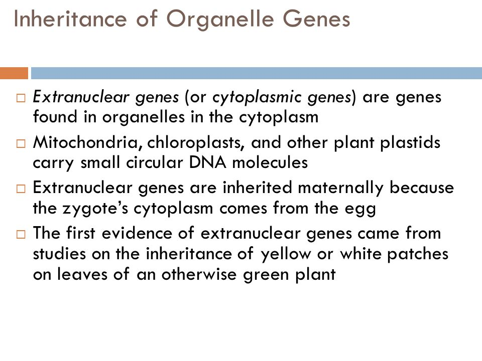 Inheritance of Organelle Genes