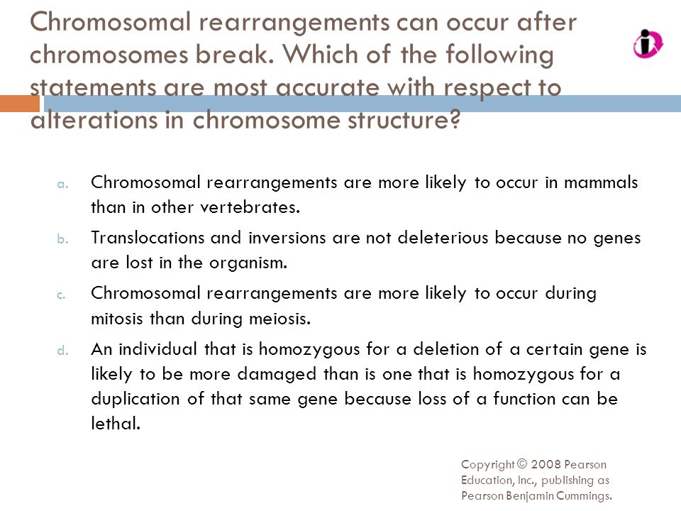 Chromosomal rearrangements can occur after chromosomes break