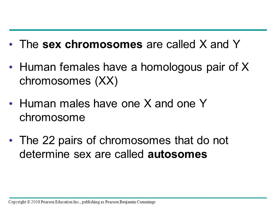 Chromosomes that are not sex chromosomes are called galleries 72
