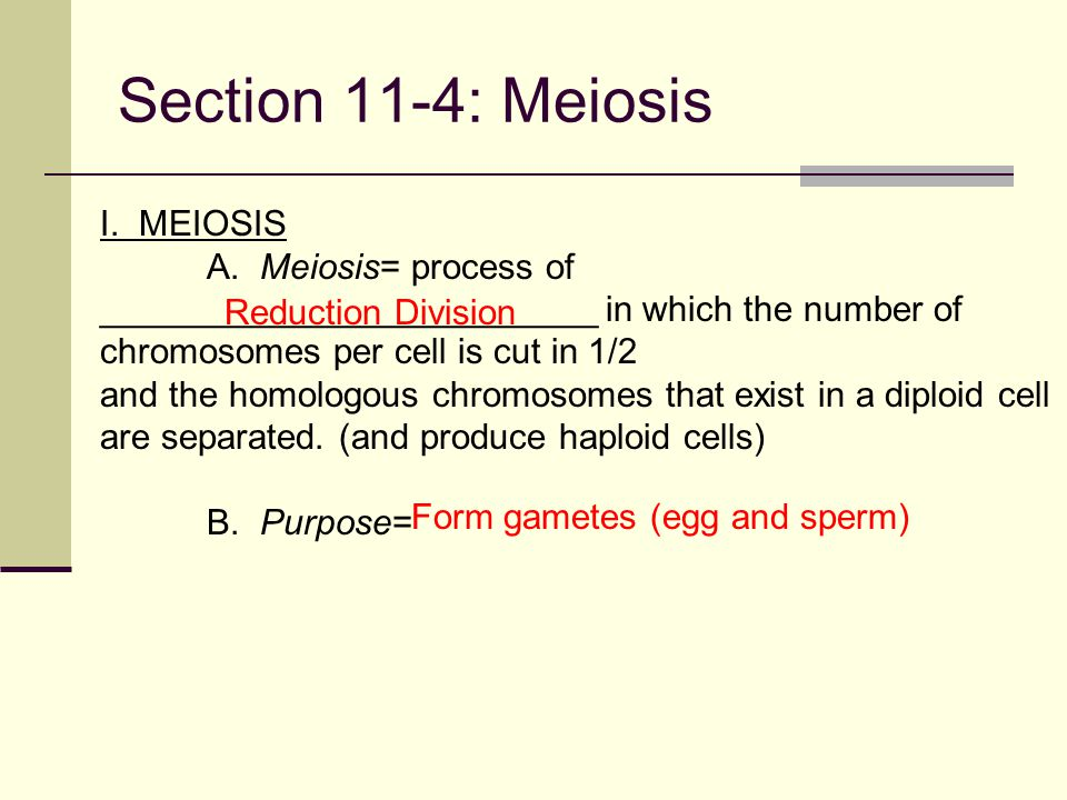 Introduction to Genetics: Mendel and Meiosis - ppt video ...