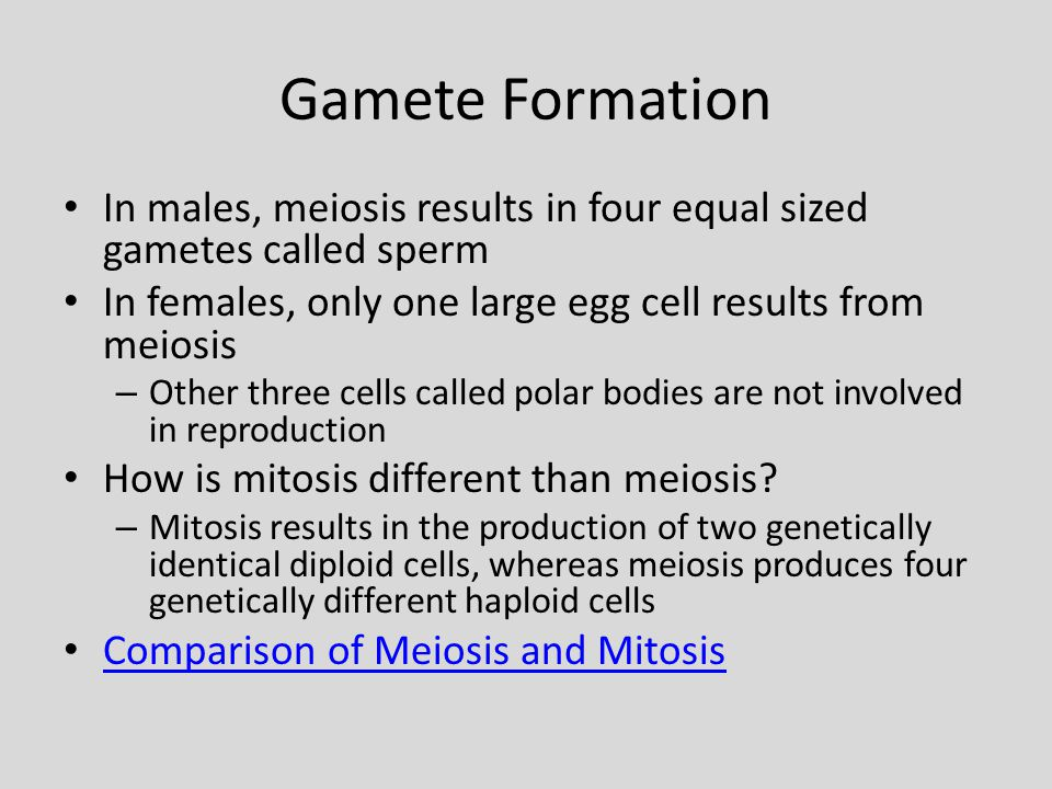 Gamete Formation In males, meiosis results in four equal sized gametes called sperm. In females, only one large egg cell results from meiosis.