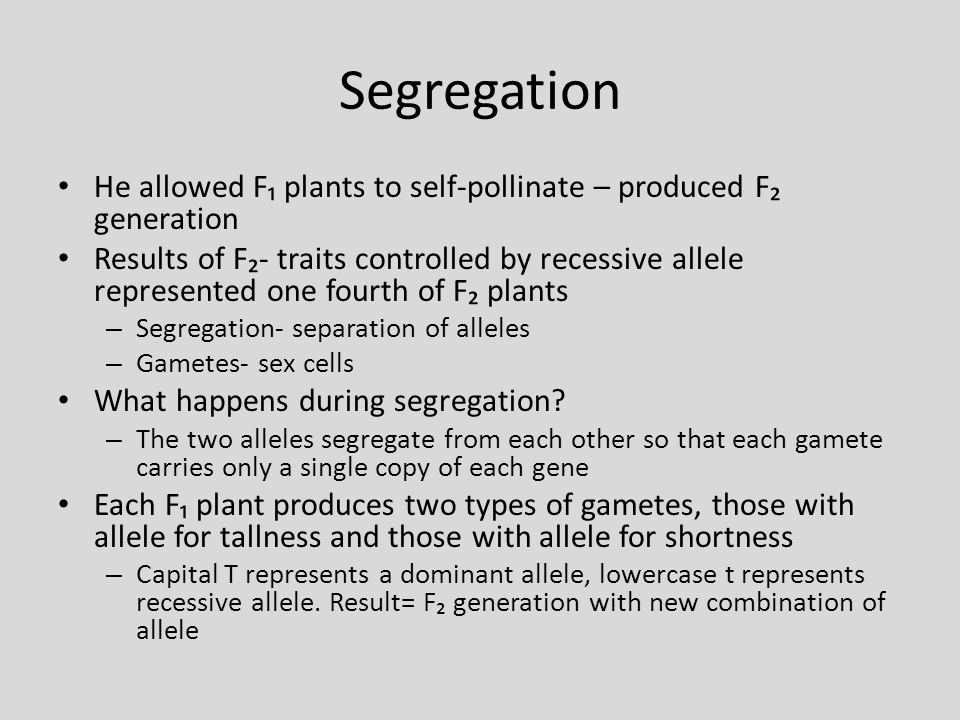 Segregation He allowed F₁ plants to self-pollinate – produced F₂ generation.