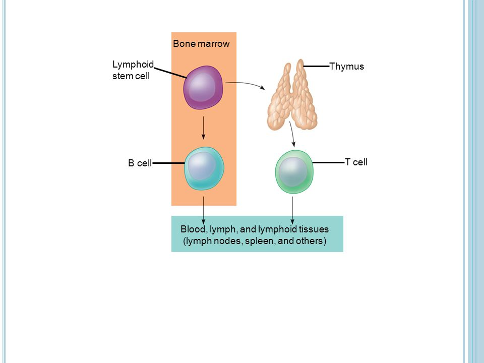 Blood, lymph, and lymphoid tissues (lymph nodes, spleen, and others)