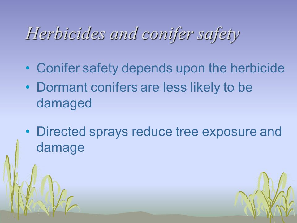 Herbicides and conifer safety