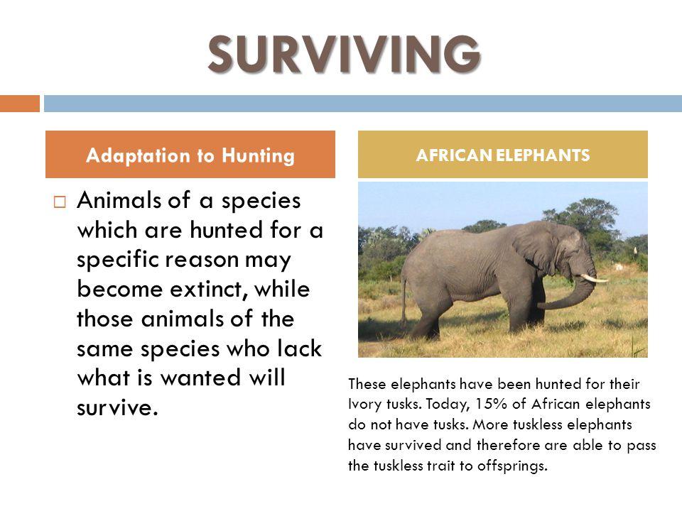 Why Do Elephants Have Ivory Tusks Math Worksheet. Worksheet. Free ...