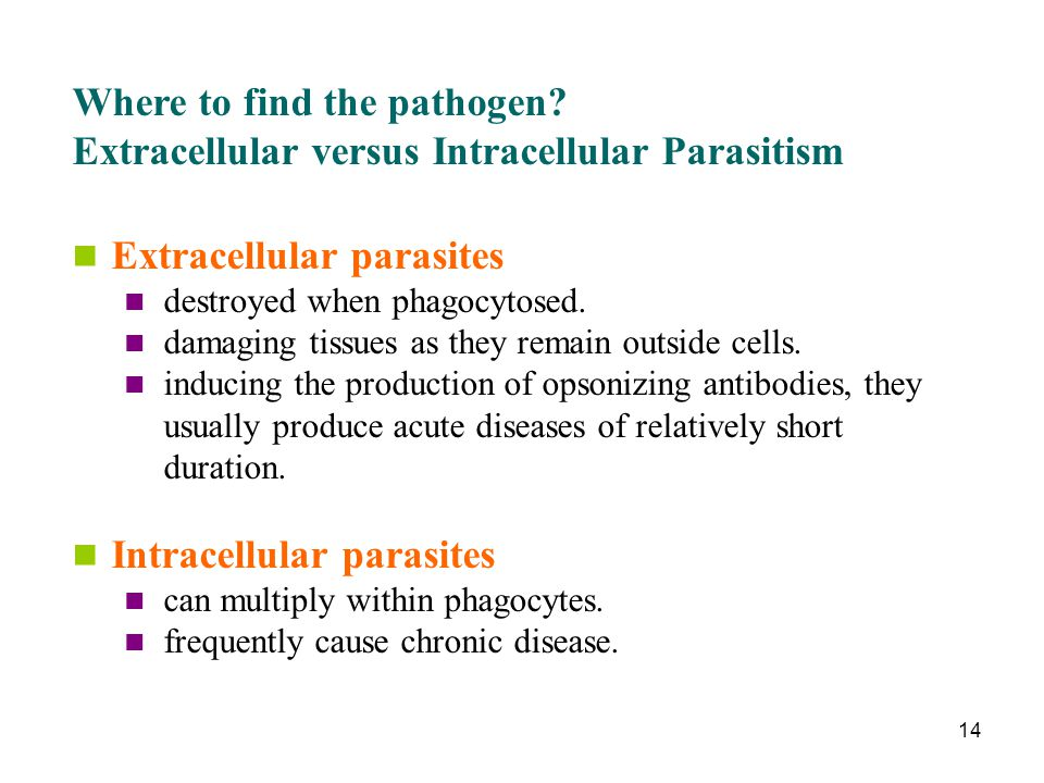 Intracellular parasite an overview   sciencedirect topics.