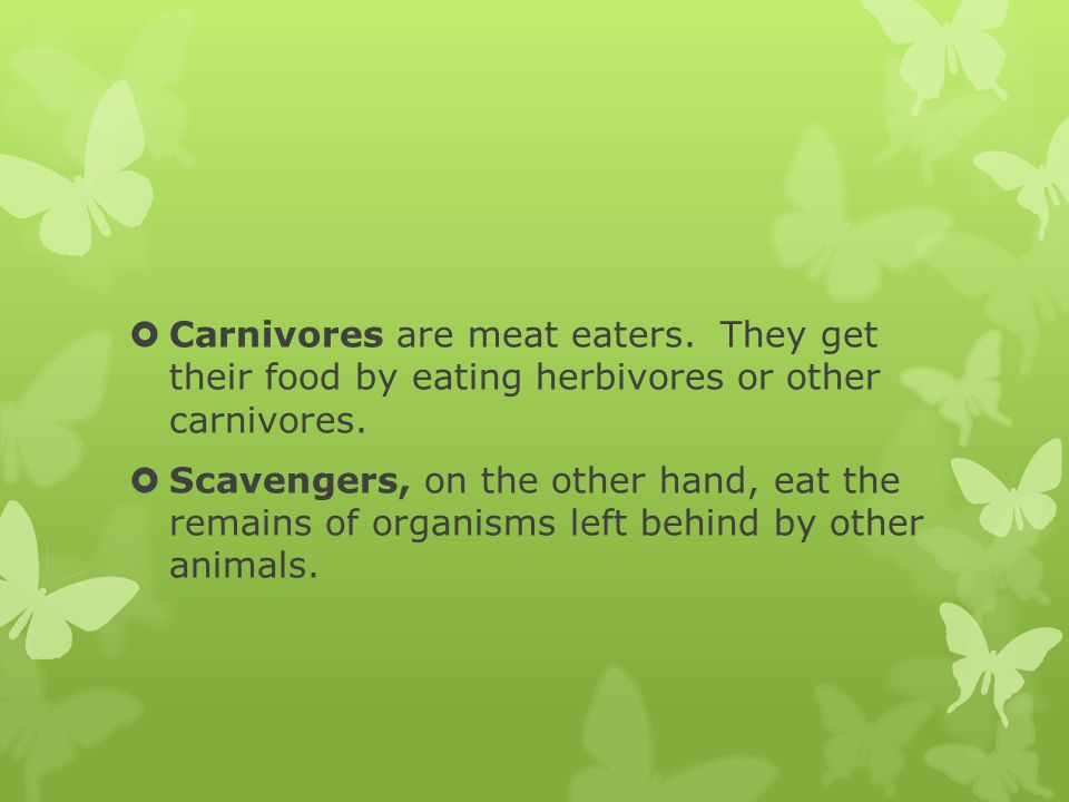Carnivores are meat eaters