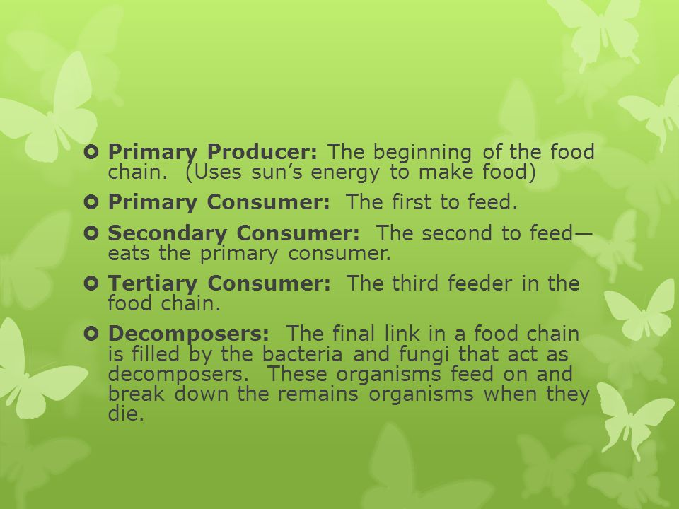 Primary Producer: The beginning of the food chain