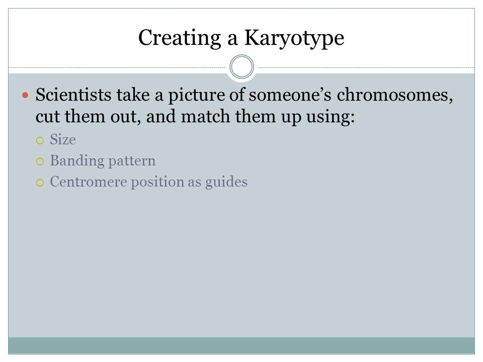 Creating a Karyotype Scientists take a picture of someone's chromosomes, cut them out, and match them up using: