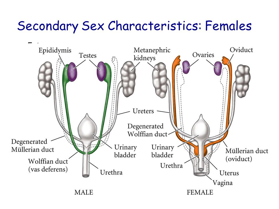 What hormone is responsible for the expression of secondary sexual characteristics in human females