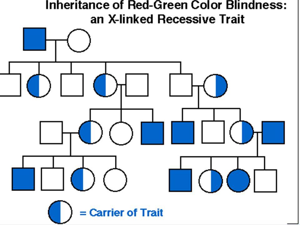 Chromosomes And Inheritance Ppt Video Online Download