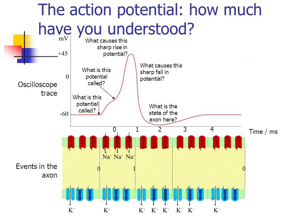 The action potential: how much have you understood