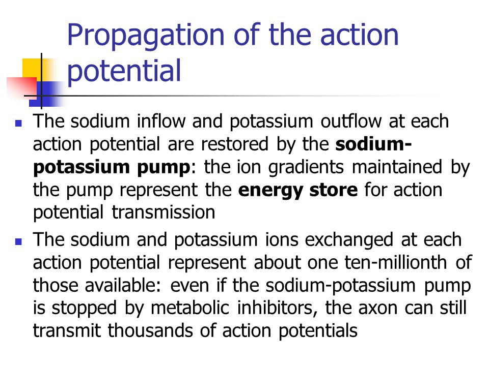 Propagation of the action potential