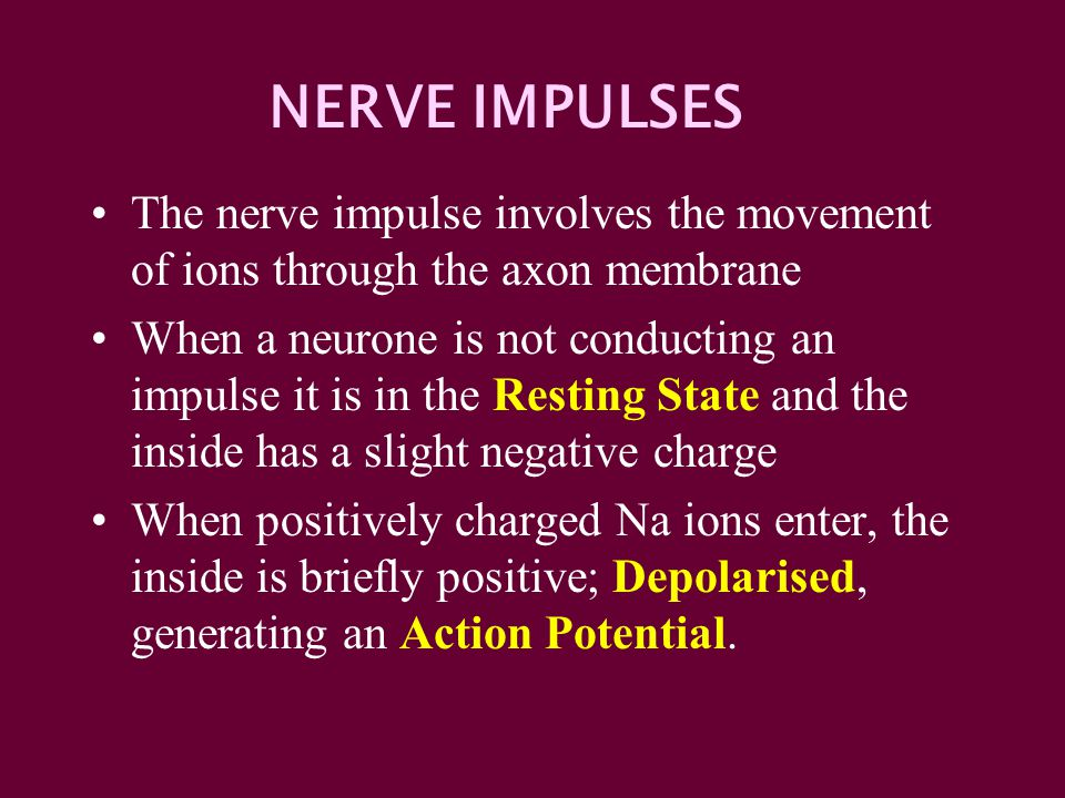 NERVE IMPULSES The nerve impulse involves the movement of ions through the axon membrane.