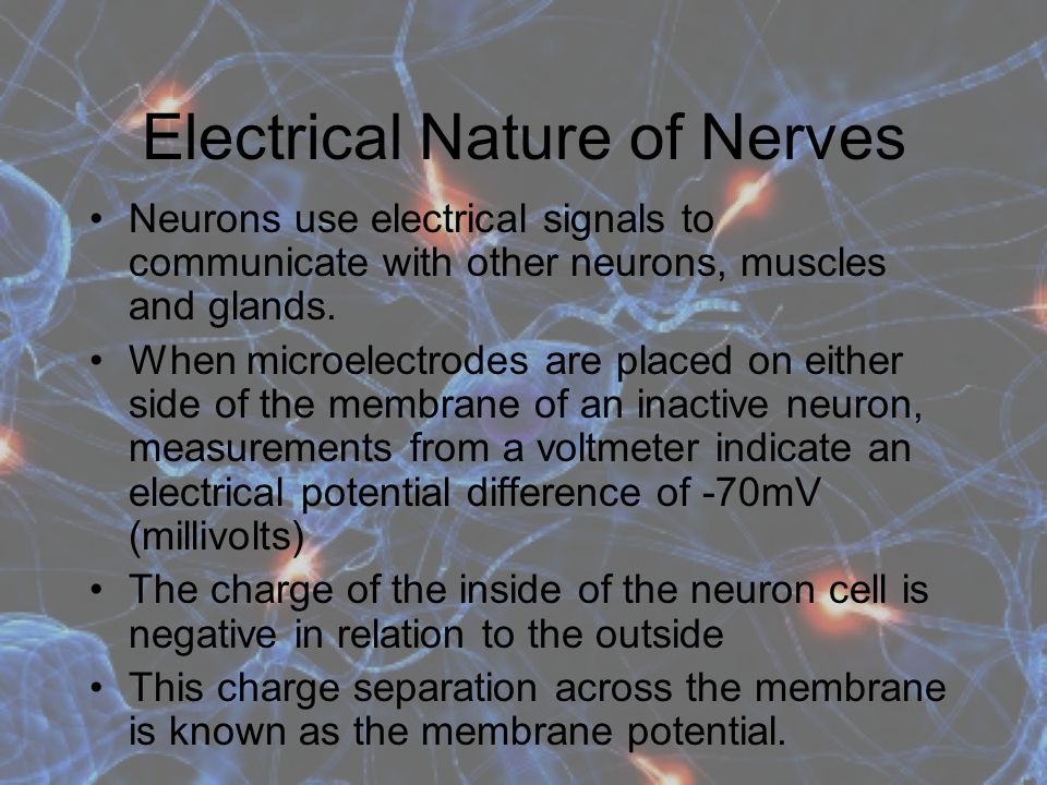 Electrical Nature of Nerves