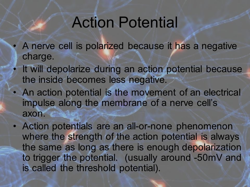 Action Potential A nerve cell is polarized because it has a negative charge.