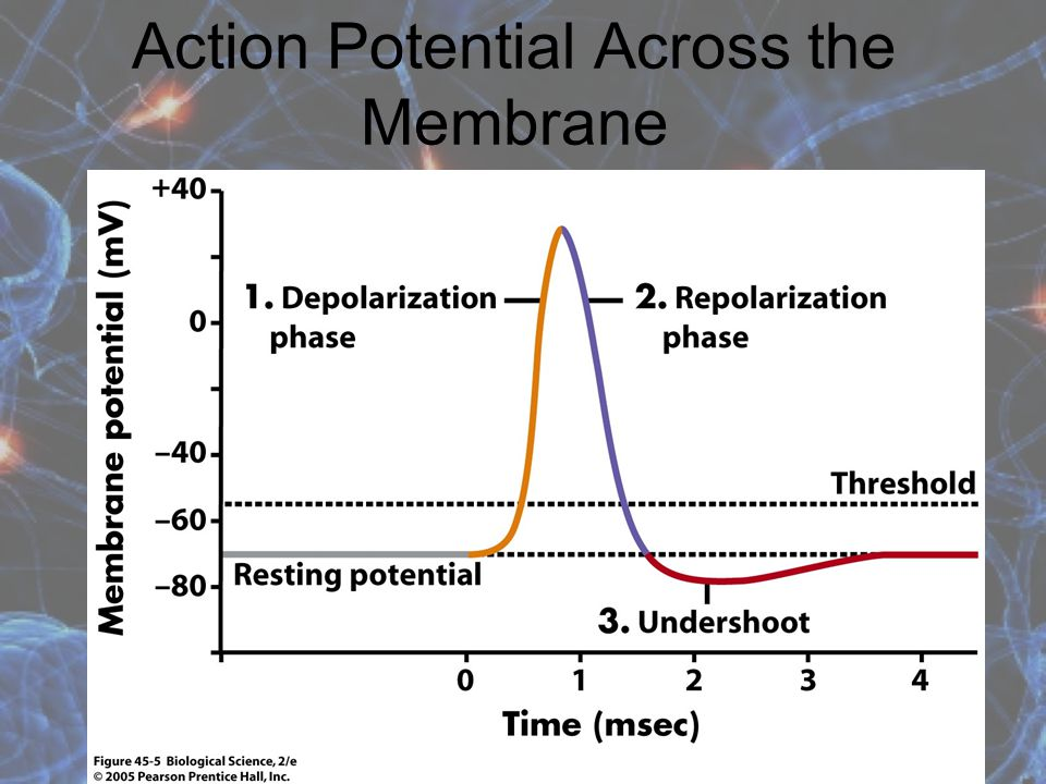 Action Potential Across the Membrane