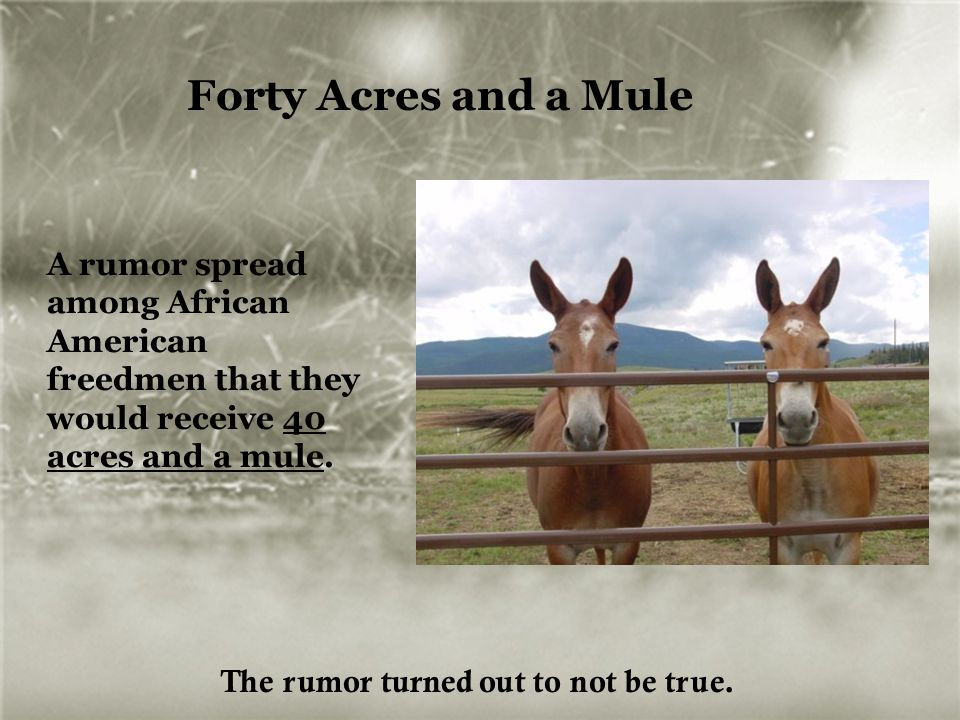 Forty Acres and a Mule A rumor spread among African American freedmen that they would receive 40 acres and a mule.