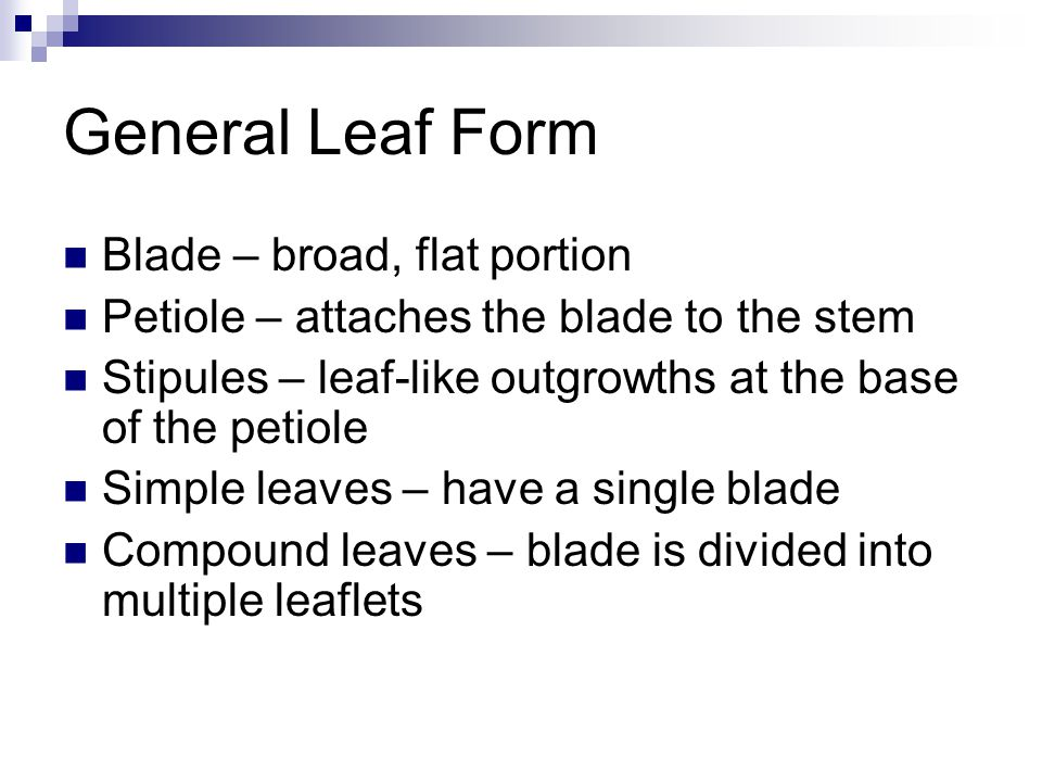 General Leaf Form Blade – broad, flat portion