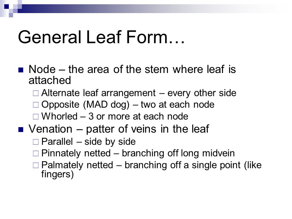 General Leaf Form… Node – the area of the stem where leaf is attached