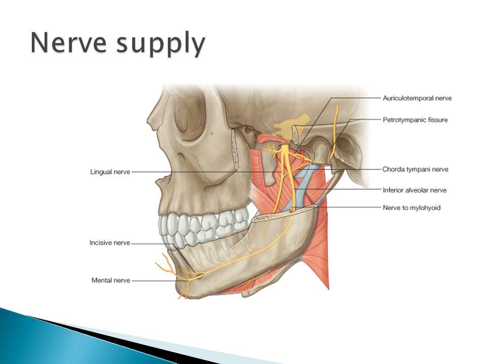 Temporomandibular joint - ppt video online download