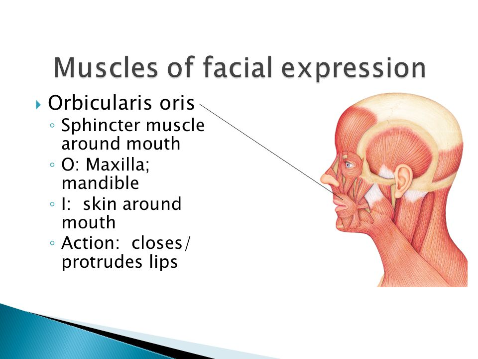 Muscles of facial expression - ppt video online download