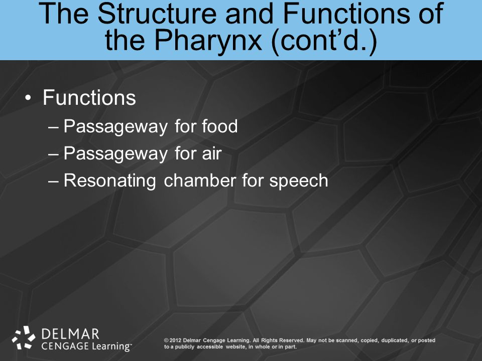 The Structure and Functions of the Pharynx (cont'd.)