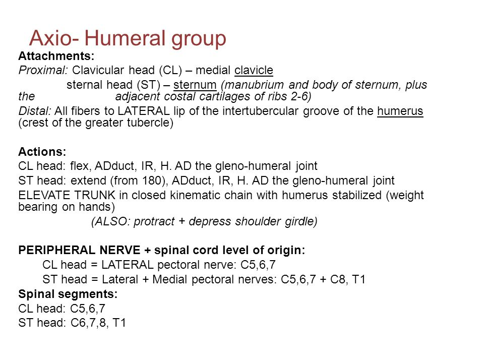 Axio- Humeral group