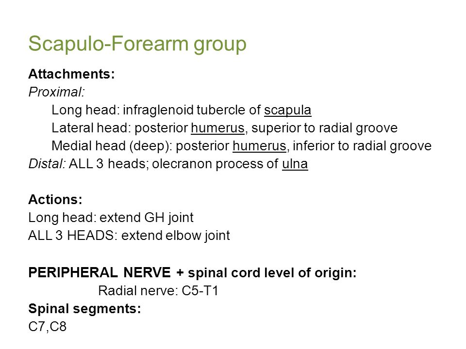 Scapulo-Forearm group