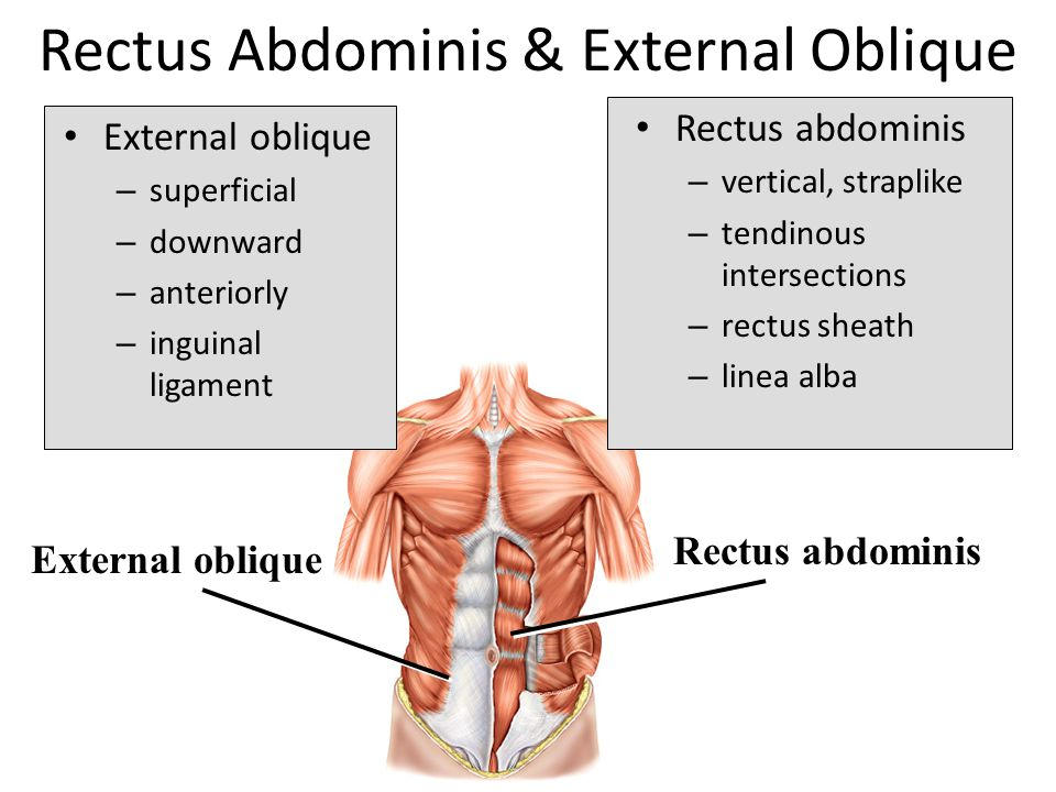 Set 2 Muscles Of Trunk And Arms Ppt Download