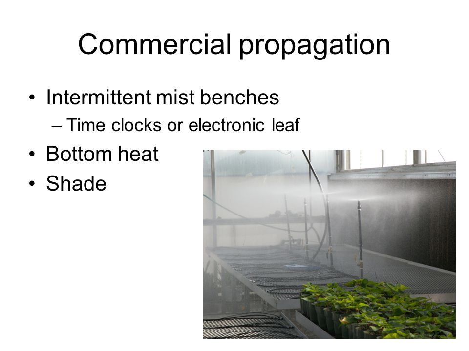 Plant Propagation Part 2 – Asexual Propagation - ppt video online
