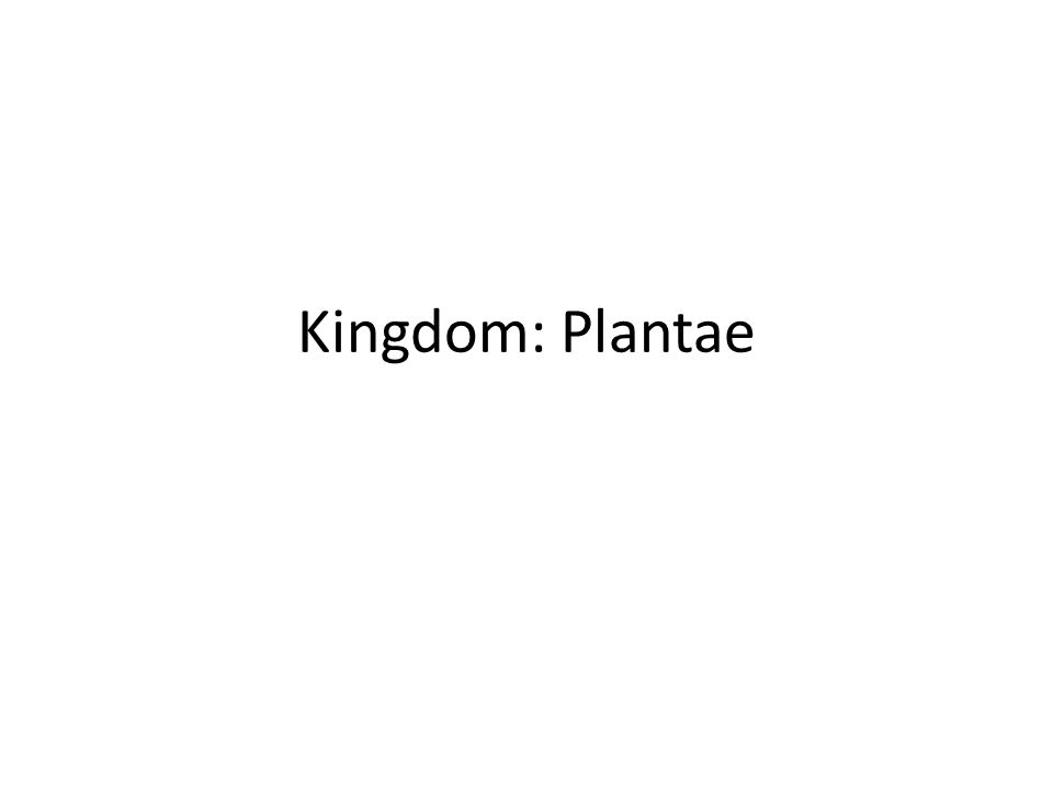 Kingdom: Plantae