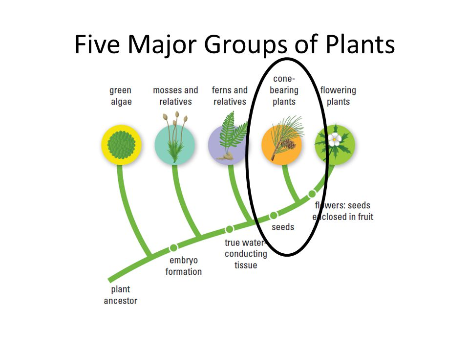 Five Major Groups of Plants