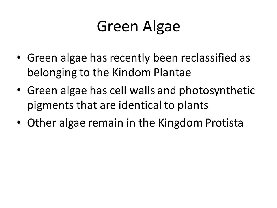 Green Algae Green algae has recently been reclassified as belonging to the Kindom Plantae.
