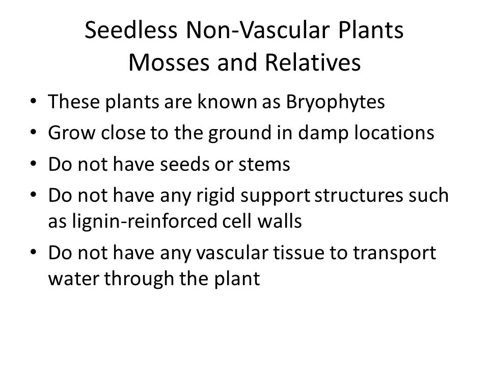 Seedless Non-Vascular Plants Mosses and Relatives