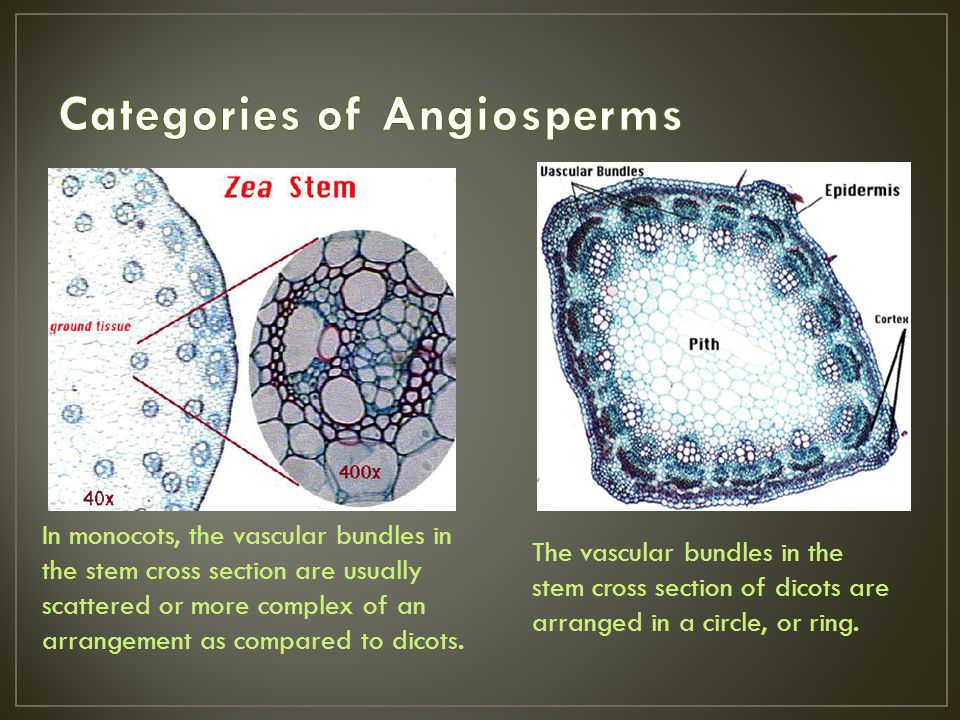 Categories of Angiosperms