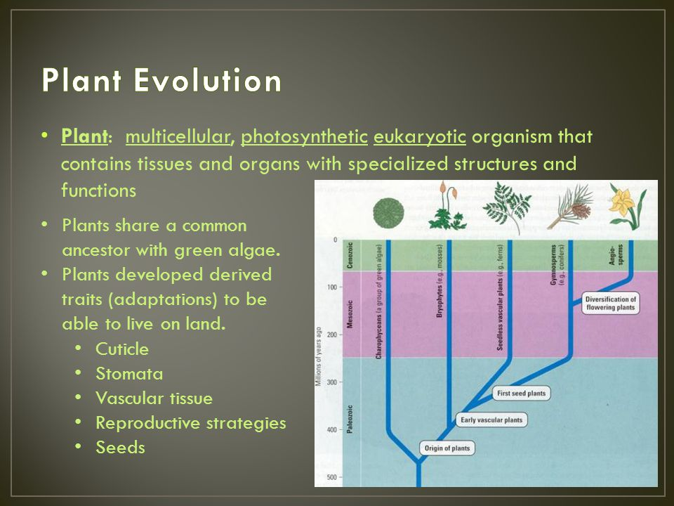 Plant Evolution Plant: multicellular, photosynthetic eukaryotic organism that contains tissues and organs with specialized structures and functions.