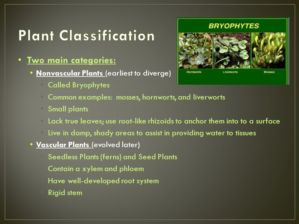 Plant Classification Two main categories:
