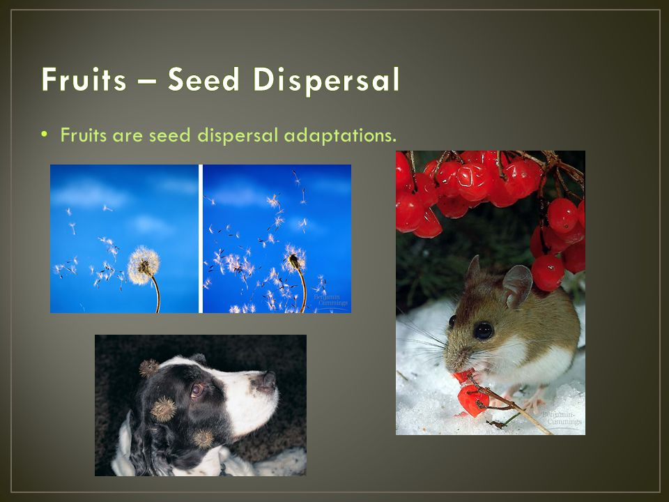 Fruits – Seed Dispersal