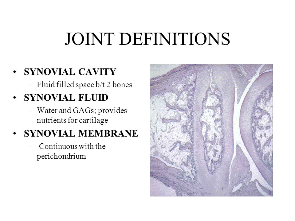 JOINT DEFINITIONS SYNOVIAL CAVITY SYNOVIAL FLUID SYNOVIAL MEMBRANE