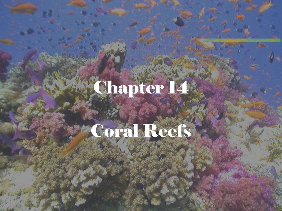 the basic categories and structure of coral reefs • coral colonies together form a reef structure that  i survival in the coral reef habitat a identify basic needs for organisms to survive 1.