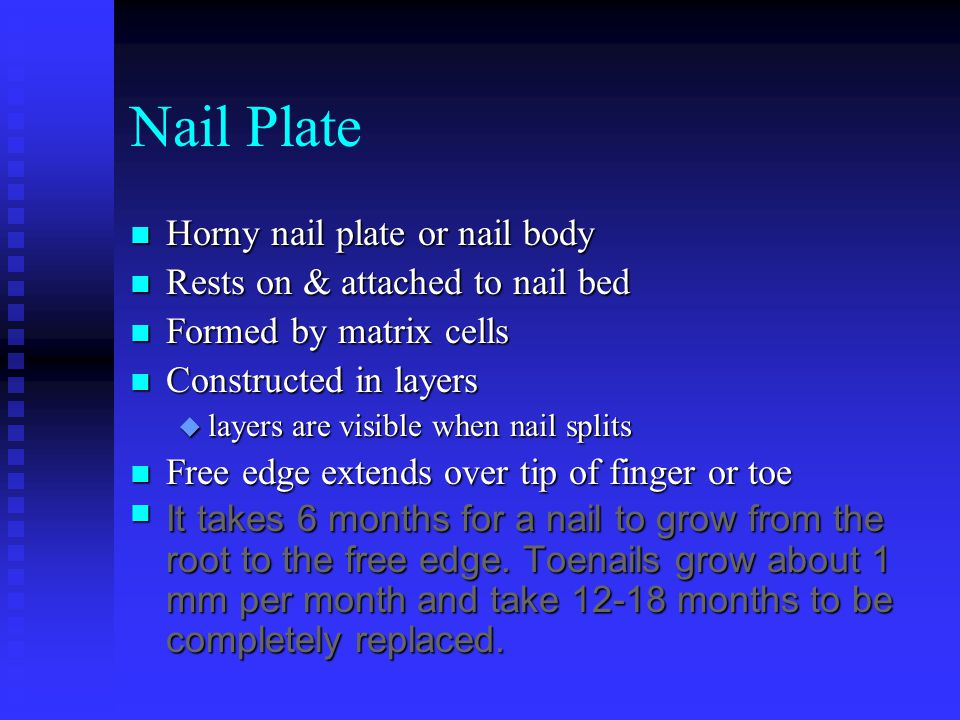 Peggy McLemore Nail Structure & Growth - ppt download