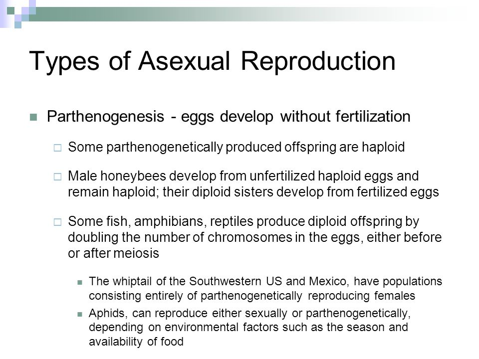 What reproduces by parthenogenesis asexual reproduction