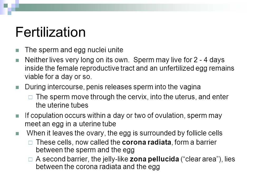 Penis enter the vagina-8991