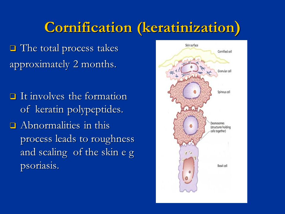 Anatomy and Physiology of the Skin - ppt video online download