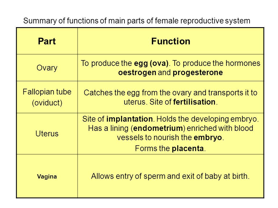 Chapter 12 The Reproductive System Genetics Ppt Video Online