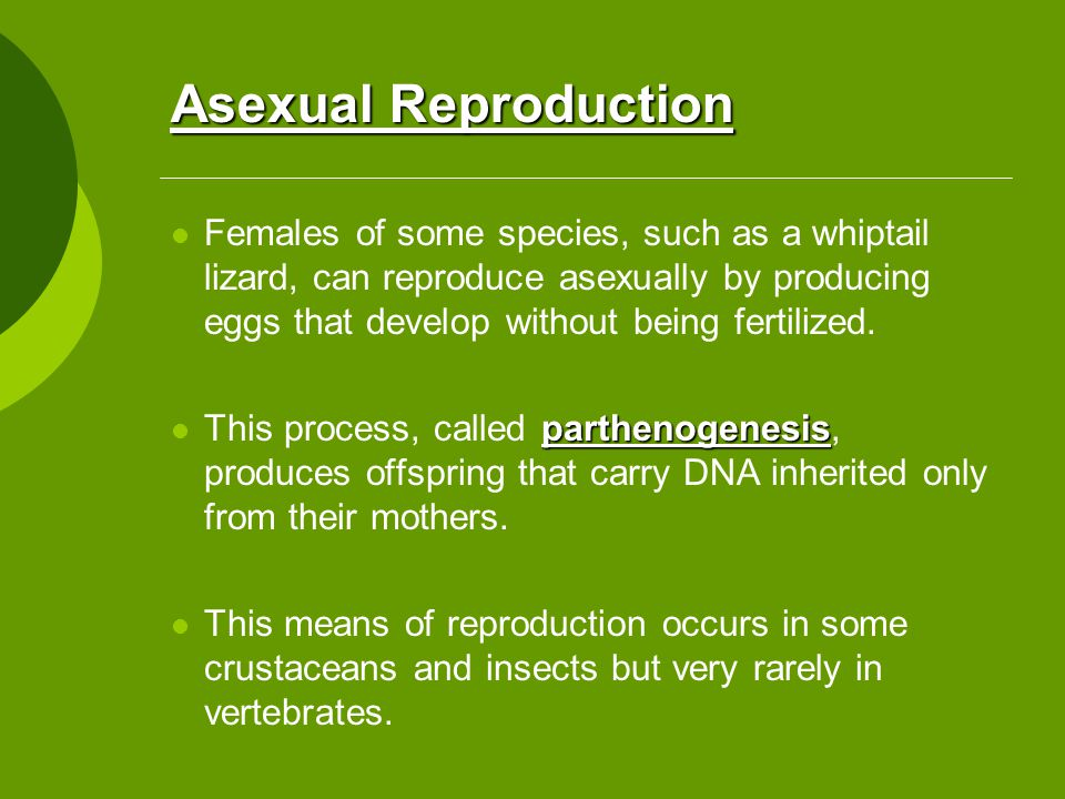 Whiptail lizards asexual reproduction fission