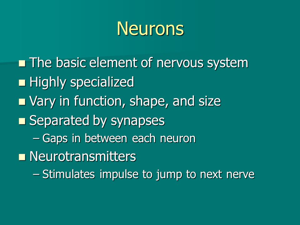 Neurons The basic element of nervous system Highly specialized